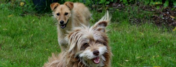 https://www.rvo.nl/onderwerpen/agrarisch-ondernemen/dieren-houden/huisdieren-houden-en-fokken/bedrijfsmatig-huisdieren-houden/bedrijfsmatig?fbclid=IwAR0SdYJxWo6TZst_dJSh8C0x04pwUFT4OKwLzg2X0snSBCnelkBuyh4bkrw