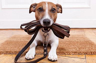 Puppy Begeleiding
