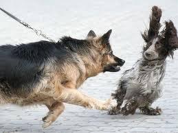 reactieve honde