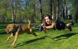 Angst, boosheid en frustratie zijn emoties van je hond